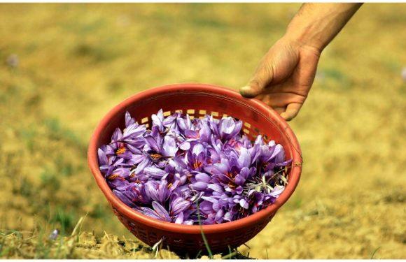 Pulwama, Kashmir: केसर की खेती के लिए है मशहूर, इतिहास में बसा है हिंदू धर्म