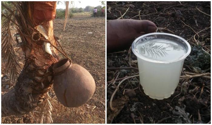 देशभर के गांधी आश्रमों में कभी अलसुबह नीरा मिल जाया करता था। अब मिलता है या नहीं? नीरा तोडी के पेड़ से निकाला जाता है, प्राकृतिक तरीके से।