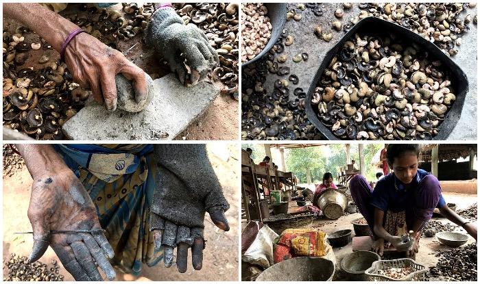 craze for cashews, cashew story, cashew making, Cashew nut processors in India, shells cashews, cashew companies, how cashew made
