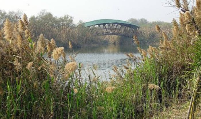 Yamuna Biodiverstity Park, Domesticated Biodiversity Zone, Conservatory of fruit yielding species, Herbal garden,