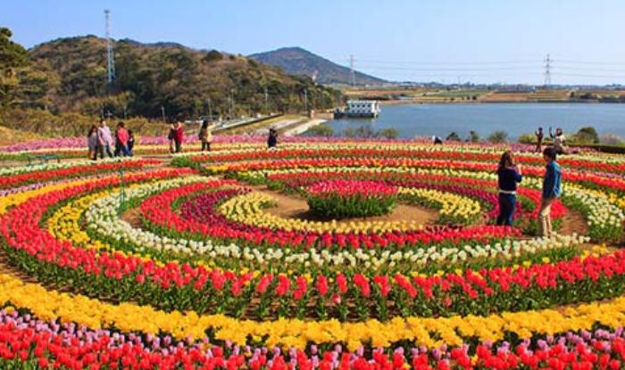tulip garden : tulip garden kashmir jammu and kashmir tour