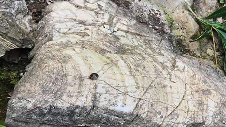 tehri garhwal 500 million year old stromatolites found in pidi parvat in pratap nagar of in uttarakhand