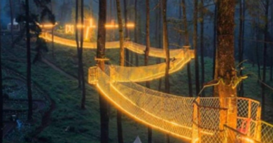 Foreign Travel-orchid forest in lembang indonesia is home to a magical bridge of lights suspended among trees