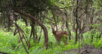If you go to Meghalaya then definitely visit Balpakram National Garden