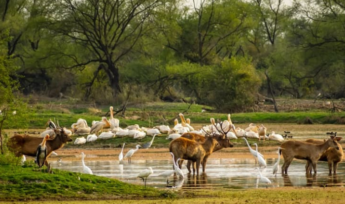 Planning to visit the Wildlife Sanctuary in Mount Abu, so full information from here