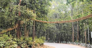 Unique bridge: Uttarakhand's Unique bridge to help reptiles cross busy jungle road