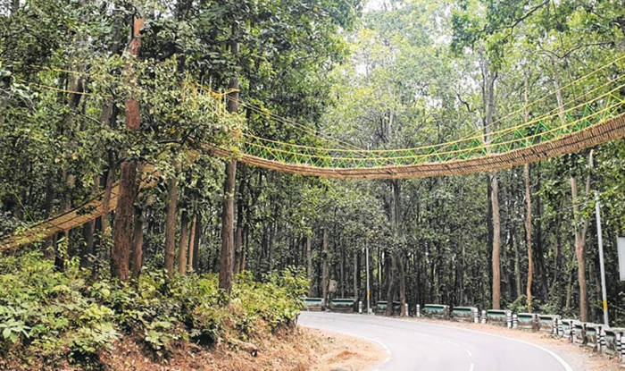 Unique bridge: Uttarakhand's Unique bridge to help reptiles cross busy jungle road